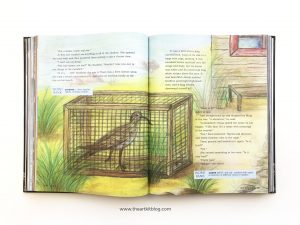 mosdos literature review coral 5th grade timberdoodle picture book 9